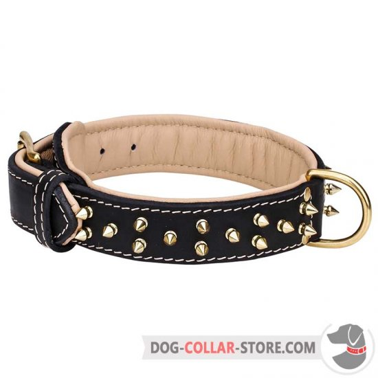 Nappa Padded Leather Dog Collar with Brass Spikes