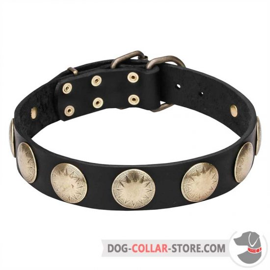 'Hip and Edgy' Dog Collar with Brass Stellar Circles