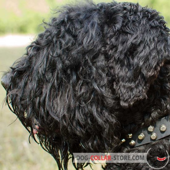 Studded Leather Black Russian Terrier Collar For Everyday Use
