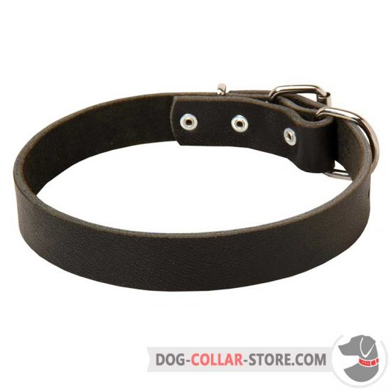 Durable Leather Dog Collar for Everyday Walking and Training