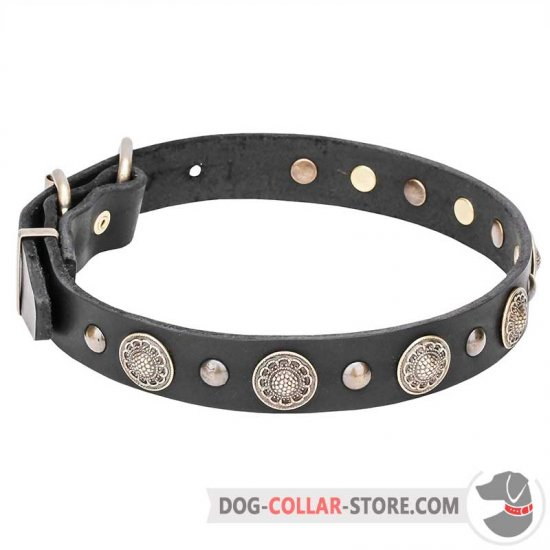 """Magic Necklace"" Dog Collar with Brass Circles and Half-Balls"