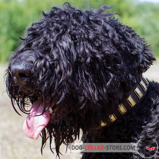 Sophisticated Leather Black Russian Terrier Collar with Brass Plates