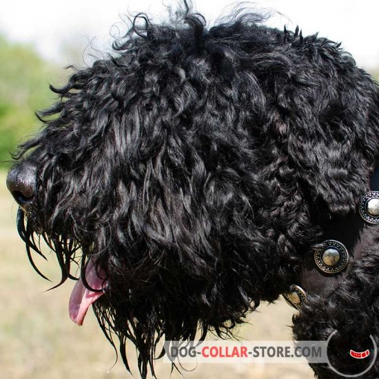 Stylish Leather Black Russian Terrier Collar with Silver Conchos