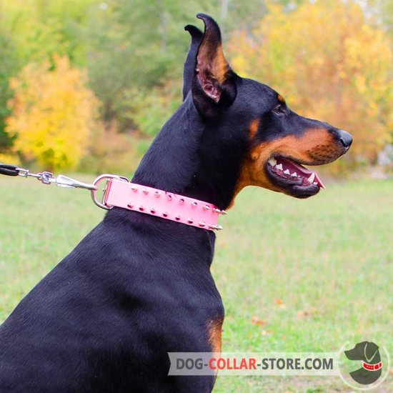 Pink Leather Doberman Collar with 2 Rows of Spikes