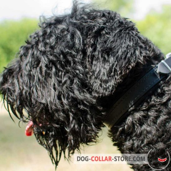 Felt Padded Leather Black Russian Terrier Collar for Walking and Training