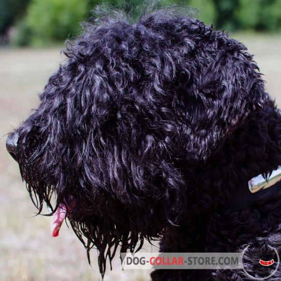 2 Ply Nylon Black Russian Terrier Collar with Name Tag