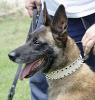 Handcrafted Leather Dog Collar for Belgian Malinois