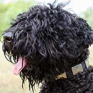 Leather Black Russian Terrier Collar With Massive Plates
