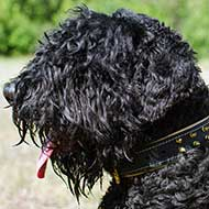 Nappa Padded Leather Black Russian Terrier Collar with Brass Spikes