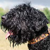 Stylish Leather Black Russian Terrier Collar with Hand Painted Flames