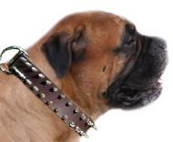 Bullmastiff Leather Spiked Dog Collar