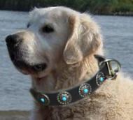 Golden Retriever Leather Dog Collar & Silver Blue Stones
