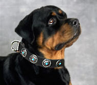 Rottweiler Leather Dog Collar & Silver Plated Circles Stones