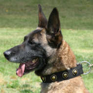 Nylon Dog collar & silver conchos.collar for Belgian Malinois
