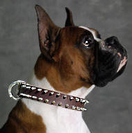 Boxer Leather Spiked Dog Collar/Bulldog spiked collar