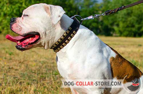 Training Leather American Bulldog Collar with Studs