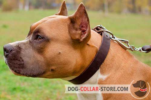 Multifunctional Classic Design Leather Dog Collar for Amstaff Walking
