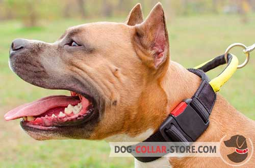 Comfortable Nylon Amstaff Collar with Handle