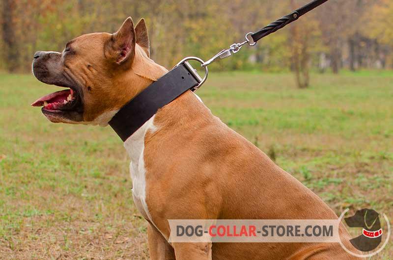Dog Walking Training Collars