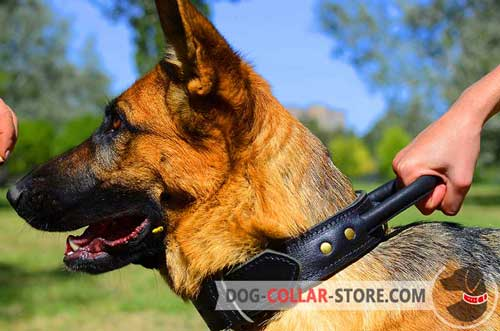 Leather Belgian Malinois Collar with Handle for Maximum Control