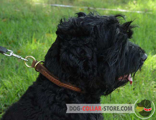 Gorgeous Braided Leather Black Russian Terrier Choke Collar