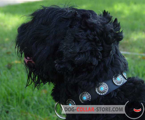 Fancy Leather Dog Collar for Black Russian Terrier Decorated with Blue Stones