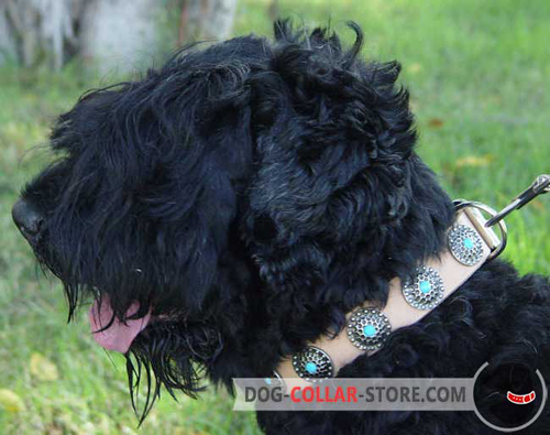 Tan Blue Stoned Leather Dog Collar for Black Russian Terrier
