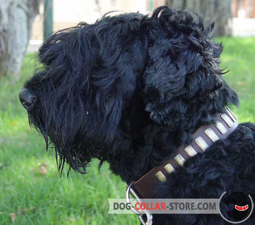 Brown Leather Dog Collar for Black Russian Terrier with Brass Plates