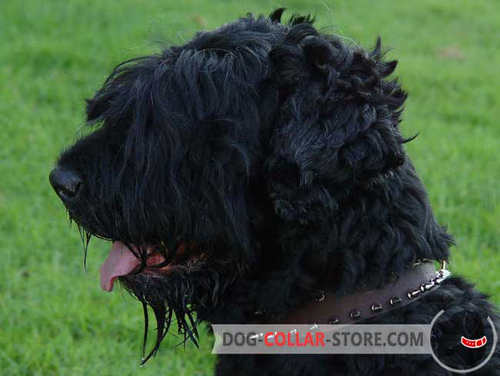 Brown Leather Dog Collar for Black Russian Terrier with Spikes
