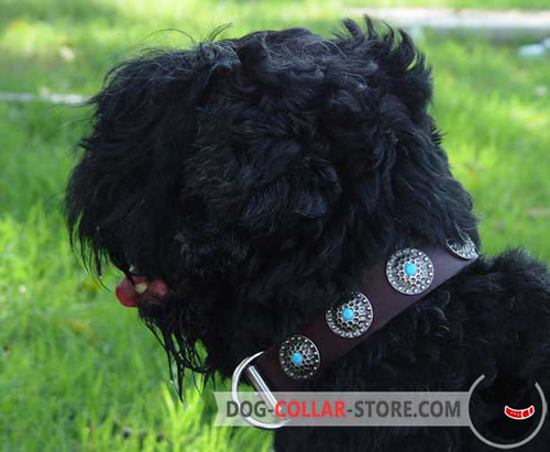 Fancy Brown Leather Dog Collar for Black Russian Terrier Decorated with Circles