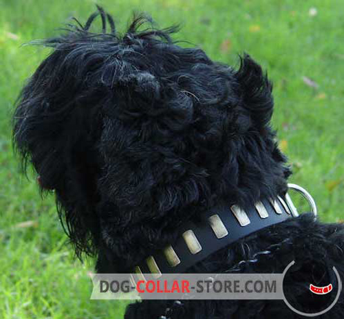 Leather Dog Collar for Black Russian Terrier Decorated with Brass Plates
