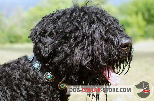 Fashion Leather Dog Collar for Black Russian Terrier with Blue Stoned Circles