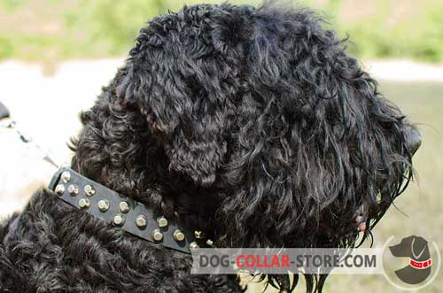 Designer Leather Dog Collar For Black Russian Terrier with Nickel Plated Studs