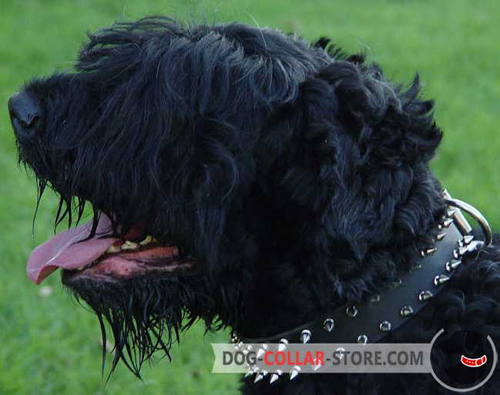 Adjustable Leather Dog Collar for Black Russian Terrier with Spikes