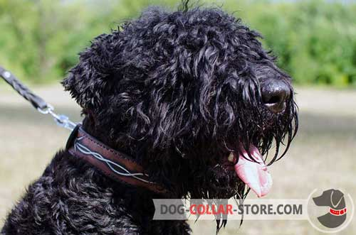 Painted Leather Dog Collar for Black Russian Terrier Walking