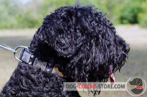 Soft Leather Black Russian Terrier Collar With Metal Decoration