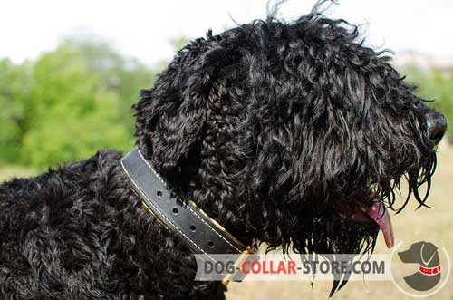 Wide Nappa Padded Leather Dog Collar for Black Russian Terrier
