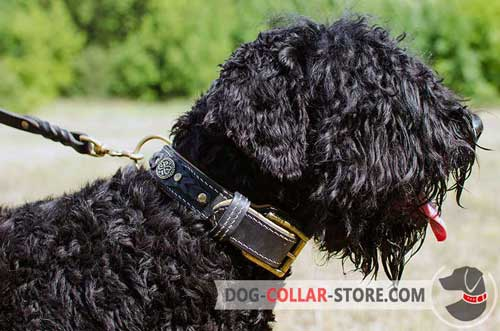 Decorated Leather Black Russian Terrier Collar Padded with Nappa for Extra Comfort
