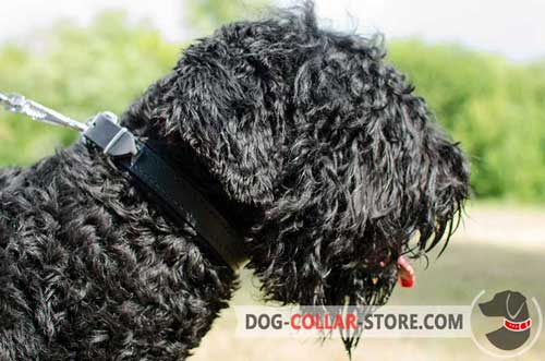 Universal Leather Black Russian Terrier Collar Padded with Soft Felt