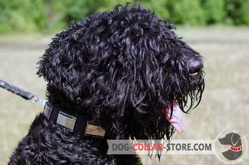 Easy Adjustable Plated Leather Dog Collar for Black Russian Terrier
