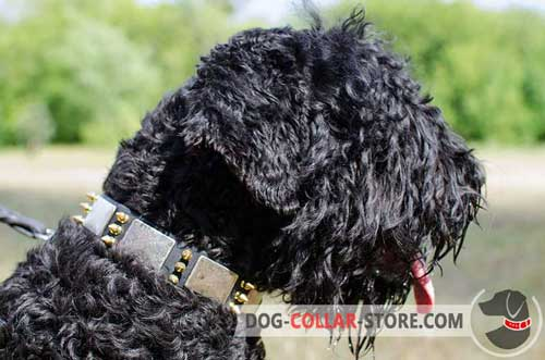 Leather Dog Collar for Black Russian Terrier Decorated with Metal Plates and Spikes