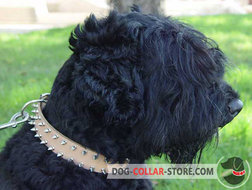 Tan Leather Dog Collar for Black Russian Terrier with Spikes