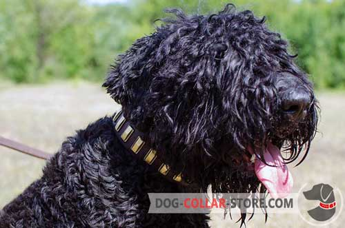 Leather Black Russian Terrier Collar Adorned With Vertical Brass Plates