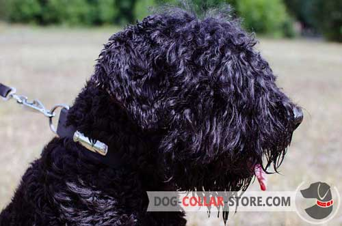Dog Collar for Black Russian Terrier with Identification Plate