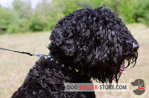 Nylon Black Russian Terrier Collar with Silver Plated Conchos