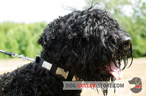 Stylish Nylon Dog Collar for Black Russian Terrier with Massive Plates
