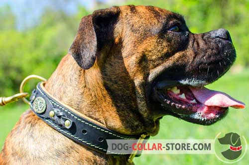 Nappa Padded Leather Dog Collar for Boxer with Braided Decoration