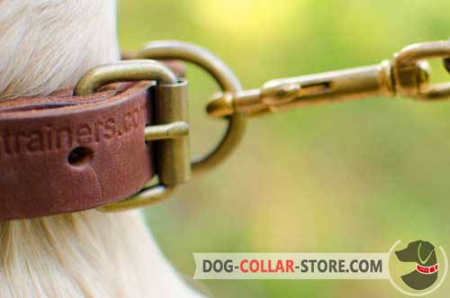 Firm Brass-Plated Buckle On Leather Dog Collar