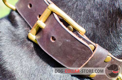 Solid Brass Buckle on Spiked Leather Dog Collar