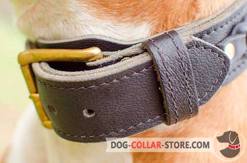 Heavy-Duty Brass Plated Buckle on Everyday Leather Dog Collar